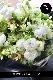 特選花束 6L 雲海-unkai ラグジュアリーの王道 ホワイト&グリーンを都会的な庭園をイメージしたブーケスタイル ★都心エリア限定配送