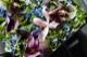 ★ 「6月」の花  碧空  ~ 季節限定の青色ハイドランジアとパフィオのアレンジで個性的に。   [ ボックスフラワー 27cm ]    都心エリア限定配送