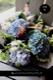 ★ 「6月」の花  碧青 〜 季節限定の青色ハイドランジアとパフィオのアレンジで個性的に。 〜  [ 特選花束 2L size ]   都心エリア限定配送