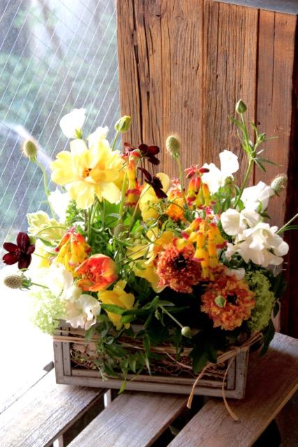 春の箱庭 - haru no hakoniwa【3月の花】ビタミンカラーの黄色オレンジ系、春のお花をたくさん! ~ [ アレンジメント M size ] ★季節限定 2月~3月★