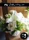 アレンジメント M 夏白 kahaku【8月の花】純白のユリに優しい色を添えたホワイトバスケットアレンジ ★季節限定 7/10~8/31