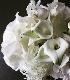 ★ 白玖 ~ラグジュアリーの王道 ホワイト&グリーンのブーケを透明ガラスボールと共に ~ [花器付きブーケ 3L size]   都心エリア限定商品