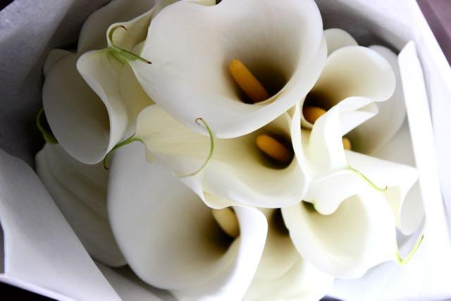 月白 - geppaku【3月の花】人気のカラーだけを贅沢に束ねたブーケ。カラーが好きな人におすすめです。 ~ [ 特選花束 イレギュラー size ] ★ 季節限定  2月〜 3月