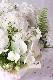白千草 ~ ラグジュアリーの王道、ホワイト&グリーンを都会的な庭園をイメージしたアレンジで ~ [ アレンジメント L size ]