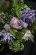 紫水晶-murasakisuisho【5月の花】シャクヤクと季節の小花のアレンジメント [ アレンジメント M size ] 季節限定 5月 紫水晶シリーズ