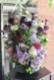 ★ 京紫 ~ エキゾチックで芸術的でありながら古風を感じさせる紫濃淡の花々を伸びやかにアレンジしました。 ~ [ アレンジメント  Special ]  都心エリア限定配送