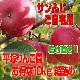 平塚りんご園 サンふじ お得な10kg箱詰め(訳ありご自宅用)