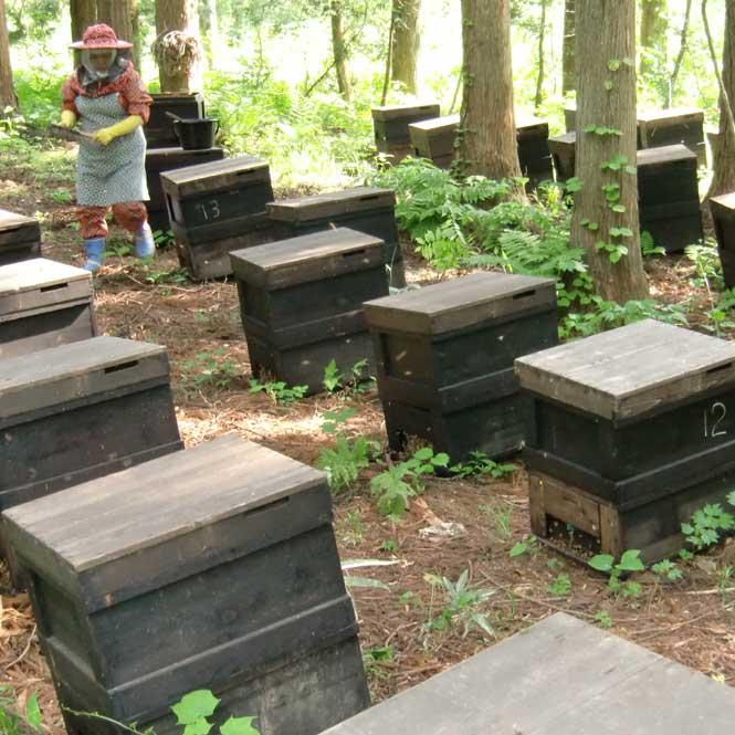 三浦養蜂場 会津産とちの蜂蜜「なめてみらんしょ」1kg