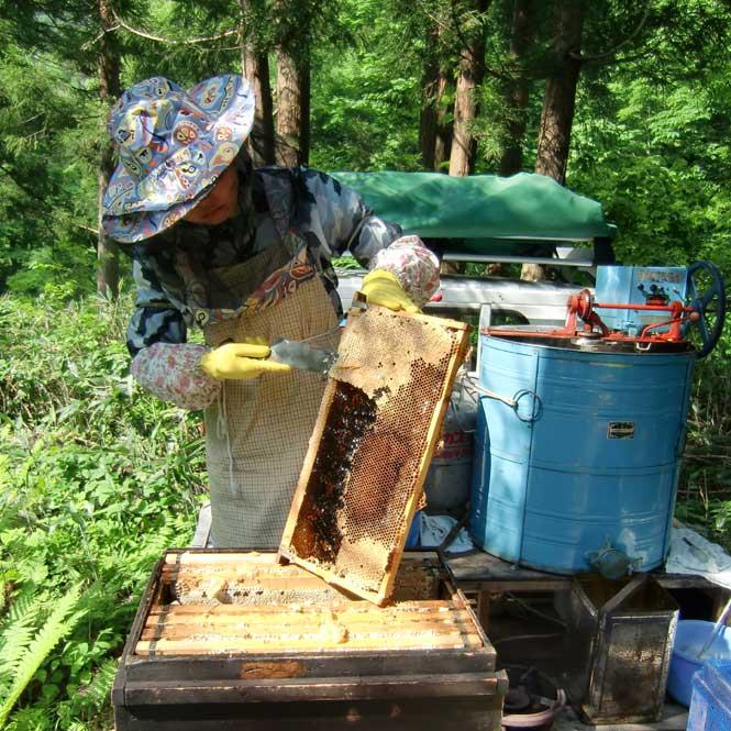 三浦養蜂場 会津産アカシアの蜂蜜「なめてみらんしょ」500g