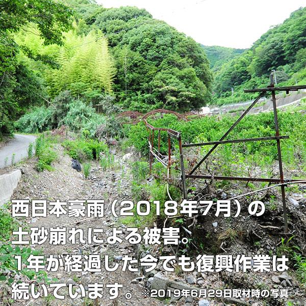 柑橘ジュースセットA【3本】(温州みかん・河内晩柑・ポンカン)