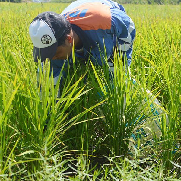 農薬・化学肥料不使用|伊予あぐり米食べ比べセット