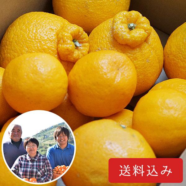 八幡浜かじ坊の【柑橘食べ比べセット(3.5kg)】