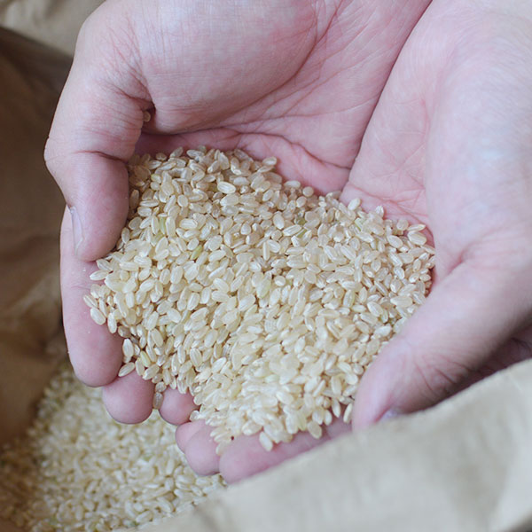 農薬・化学肥料不使用 あぐり米「にこまる」