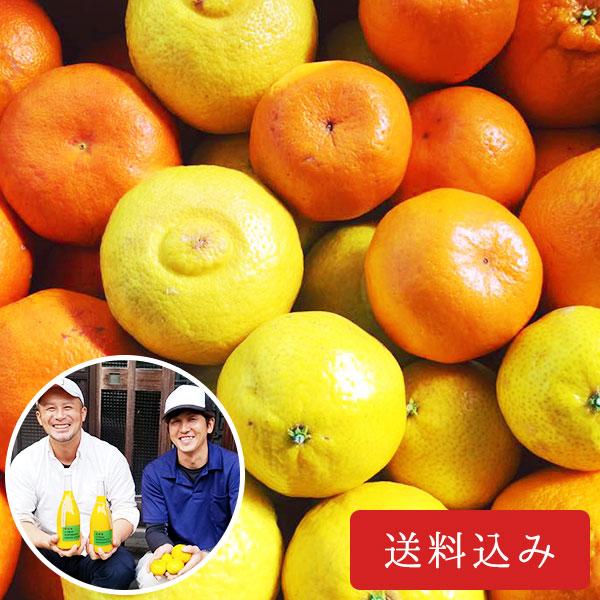 旬の柑橘詰め合わせセット