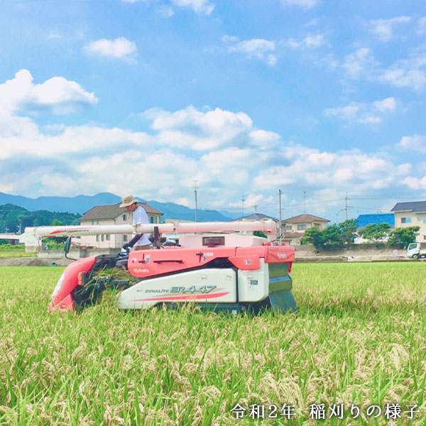 イセヒカリ 白米 5kg/10kg【有機JAS認証】【農薬・化学肥料不使用】