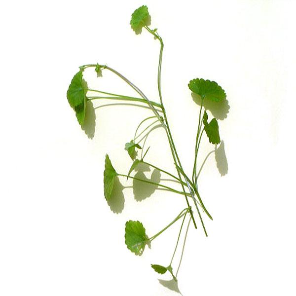 【まとめ買い】カキドオシ茶(筒井農園の健康茶)×3袋セット