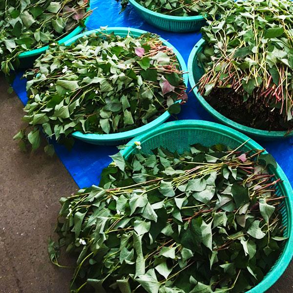 【まとめ買い】ドクダミ茶(筒井農園の健康茶)×3袋