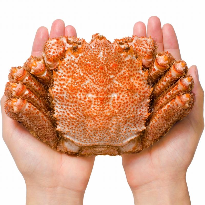 送料無料 浜茹でメガ毛がに姿×1尾 特大 平均570g前後 ボイル冷凍 &本まぐろ大トロ200gセット