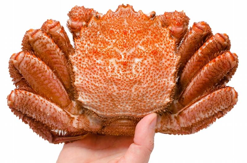 毛ガニ 毛がに 毛蟹 浜茹で 毛ガニ姿 平均 400g ×1尾