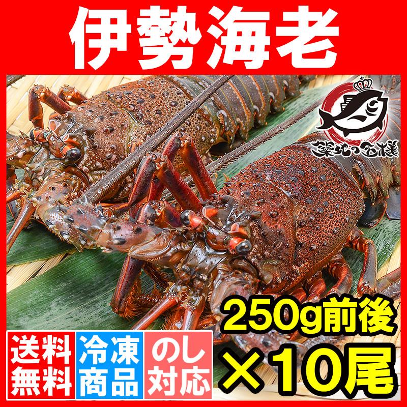 送料無料 伊勢海老 国産 10尾 (BBQ バーベキュー)