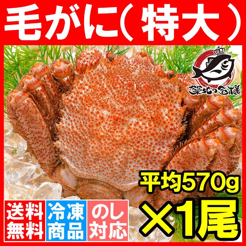 送料無料 毛がに 毛蟹 浜茹でメガ毛ガニ姿 570g ×1尾