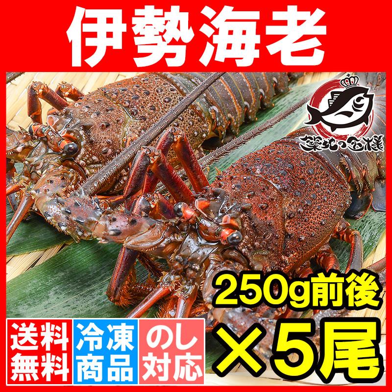 送料無料 伊勢海老 国産 5尾 (BBQ バーベキュー)