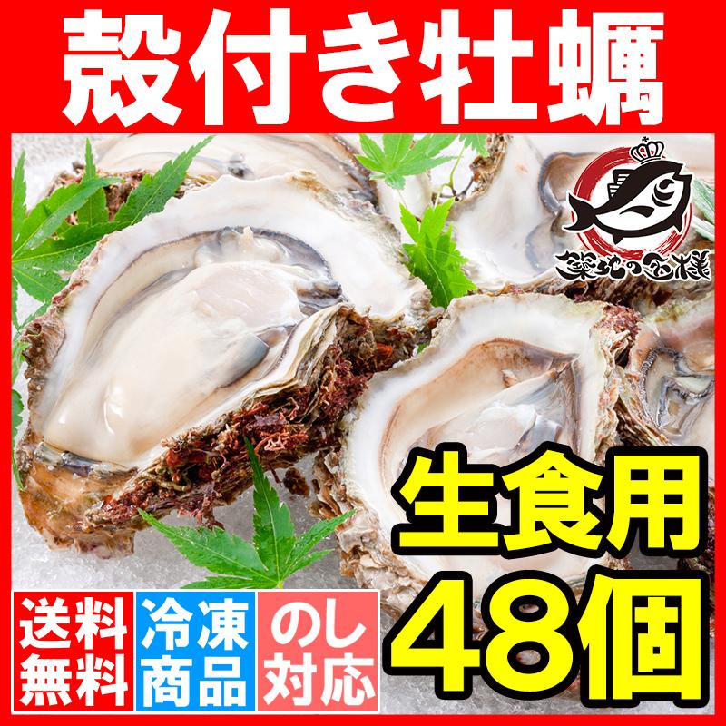 送料無料 生牡蠣 殻付き 生食用カキ(48個入り・冷凍殻付き牡蠣・生食用)