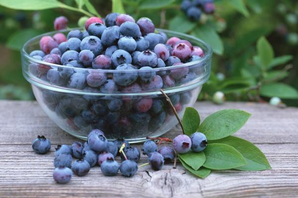 ブルーベリー 冷凍ブルーベリー 1kg・500g×2パック 冷凍フルーツ ヨナナス