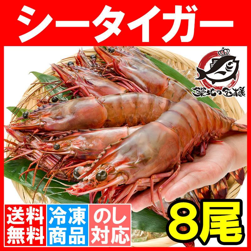 送料無料 シータイガー 8尾 約30cm 1.5kg