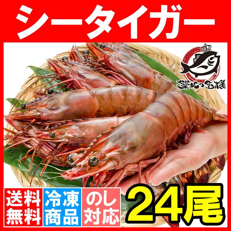 送料無料 シータイガー 24尾 約30cm 1.5kg×3箱