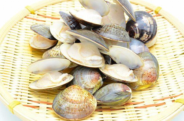 送料無料 はまぐり 500g  ハマグリ 蛤 ボイルハマグリ