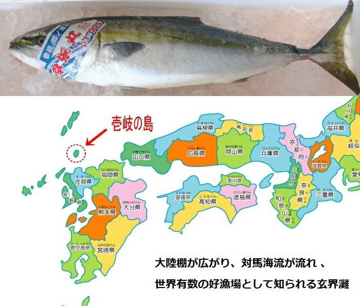 天然 寒ブリ 嫁ブリ 長崎県壱岐産 8kg〜8.9kg
