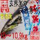 天然 寒ブリ 嫁ブリ 神ぶり 壱岐産 10kg〜10.9kg