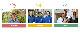 11/12以降発送 めがね米 3兄弟 無洗米 900g(300g×3) 福井県鯖江産 コシヒカリ