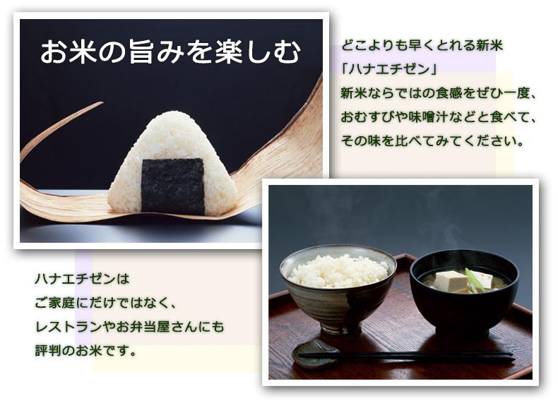 【定期購入】ハナエチゼン 白米 5kg 福井県産