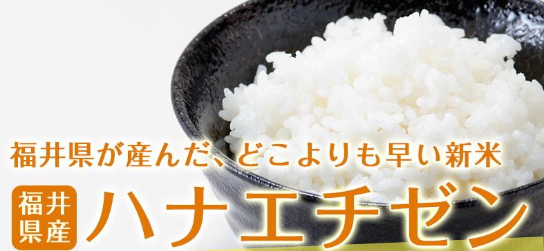 ハナエチゼン 白米 10kg(5kg×2) 福井県産