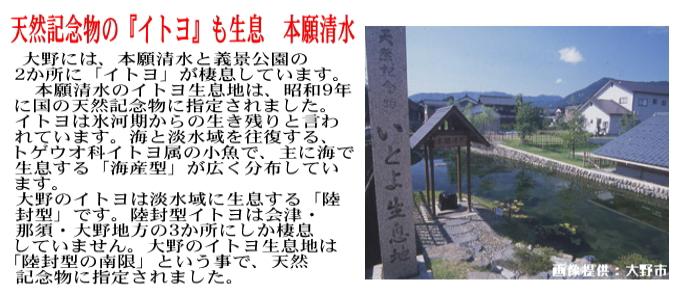 大野コシヒカリ 白米 10kg(5kg×2) 福井県大野産