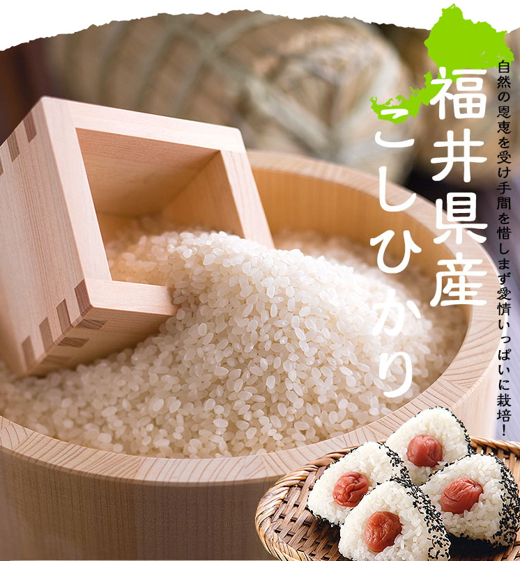 福井県産コシヒカリ 白米 10kg(5kg×2)