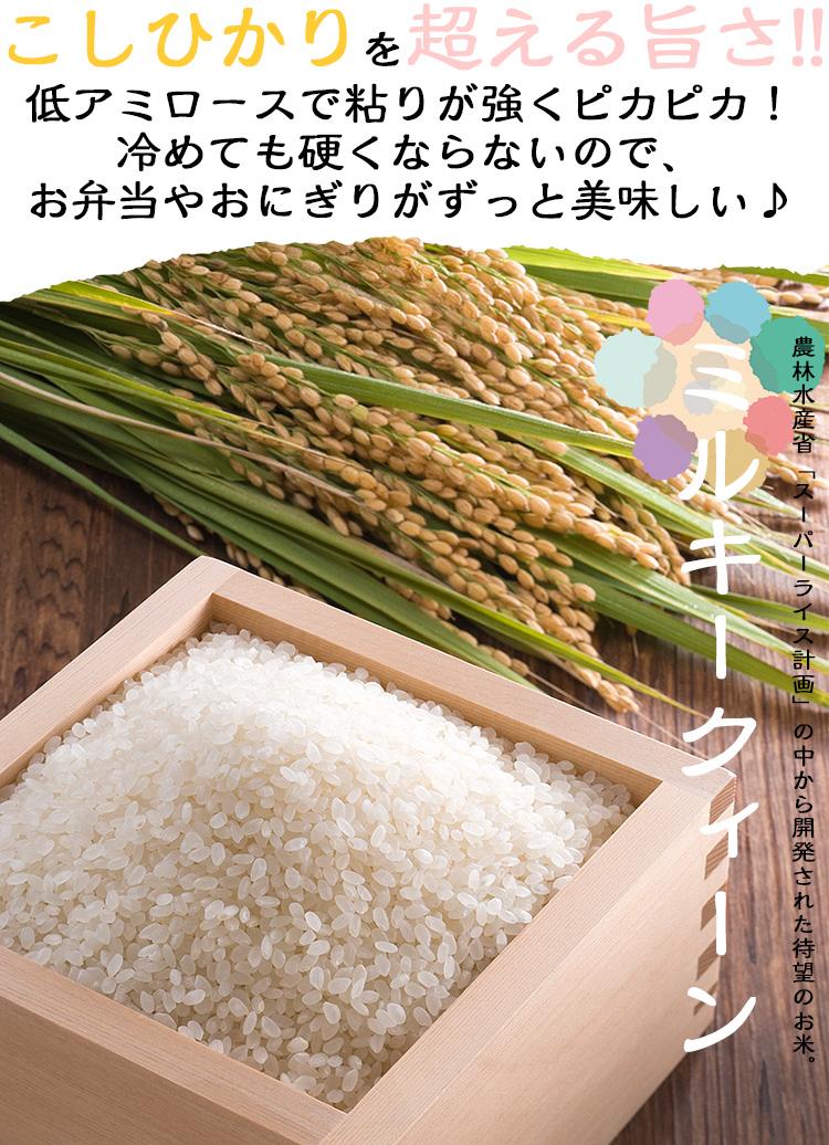 ミルキークィーン 無洗米 1kg 福井県産