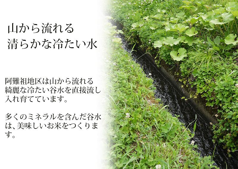 阿難祖コシヒカリ 白米 10kg(5kg×2) 福井県大野阿難祖産