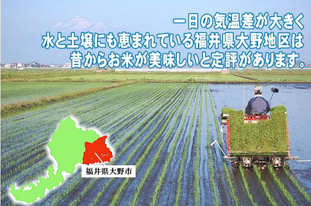 大野コシヒカリ 白米 5kg 福井県大野産