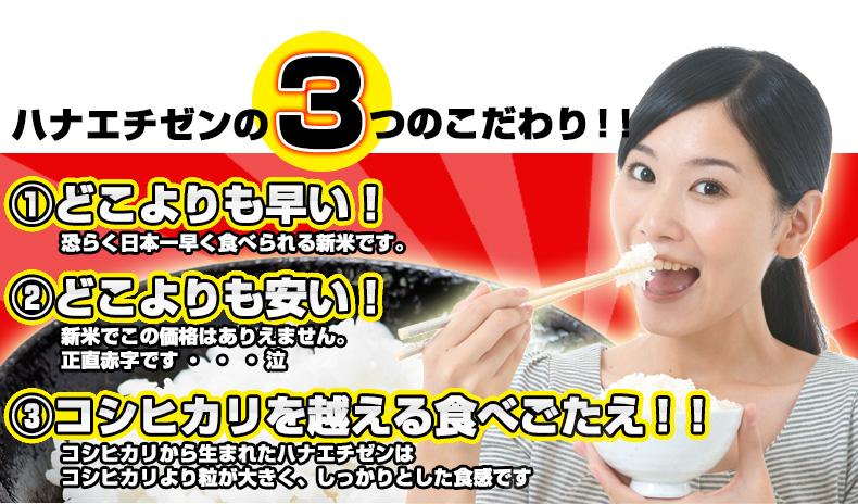 ハナエチゼン 白米 15kg(5kg×3) 福井県産
