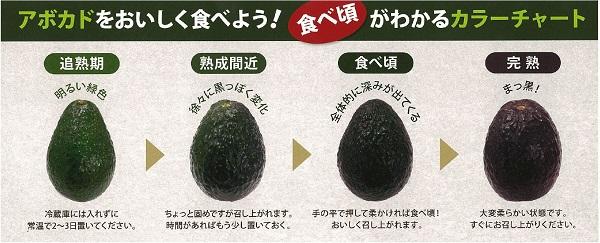 アボカド大玉24入(6�) メキシコ産 ハス種 送料別