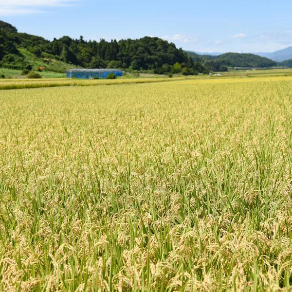 【送料無料】山形県産 つや姫 5kg