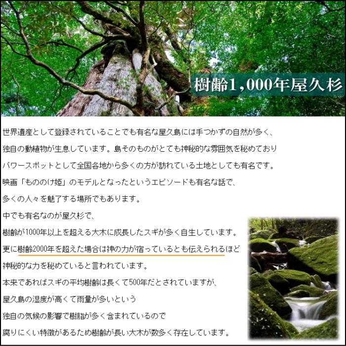 ◆屋久杉の精霊ブレスレット