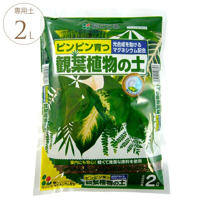 葉っぱ喜ぶ 観葉植物の土 2リットル 観葉植物 専用用土 マグネシウム/光合成 助ける/葉 濃くなる/室内でも/軽い 安心/初期肥料入り/