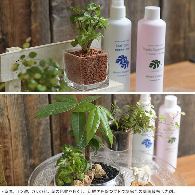 葉面散布活力剤 300ml 肥料 植物育成 元気に/育てる 花 木/