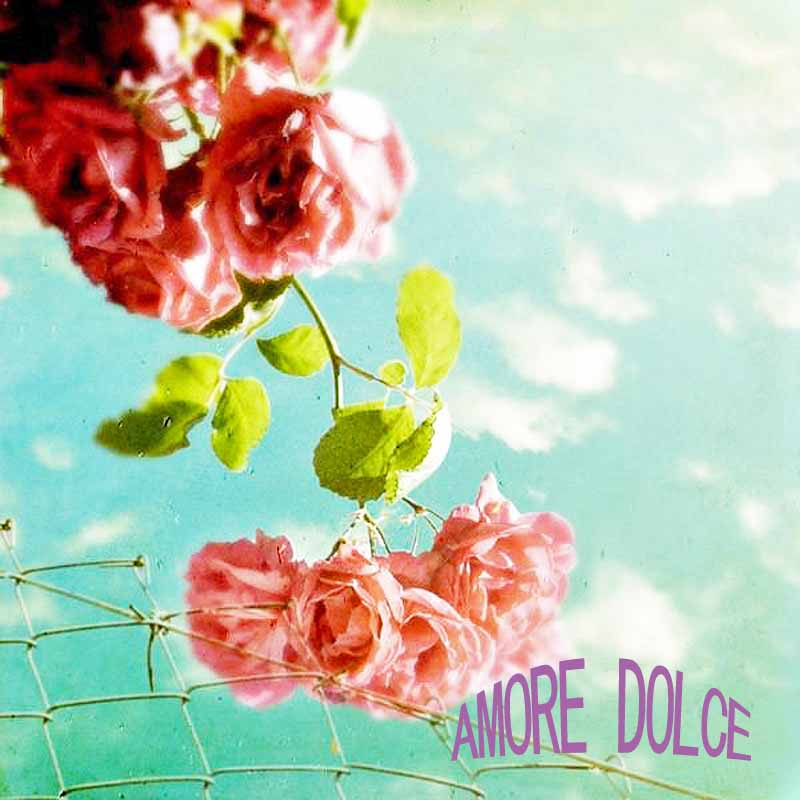AMORE DOLCE アモーレ ドルチェ