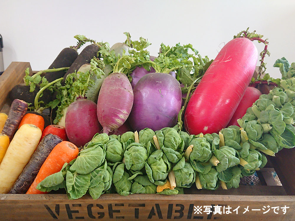 【早期予約承り中!】おまかせ野菜4,000円セット