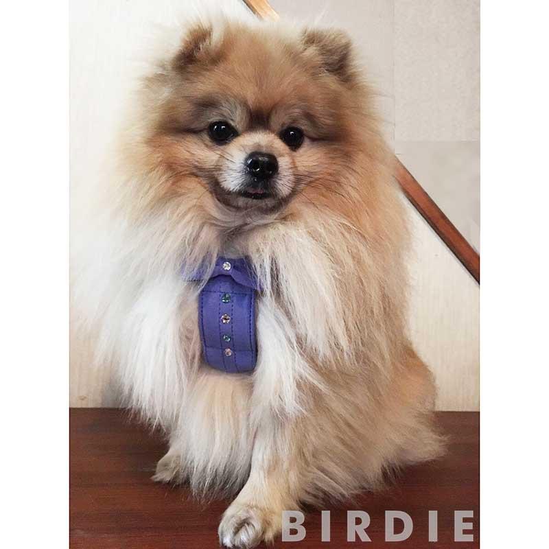 S リンバーハーネス【BIRDIE本革製小型犬胴輪】